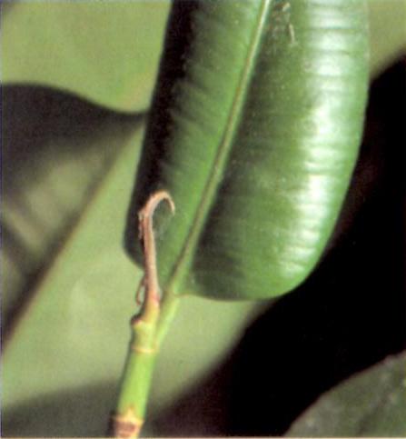 Основные болезни и вредители комнатных растений
